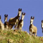 burros in San Bernadino