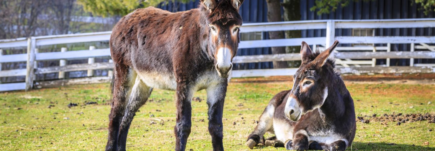 Visit the Donkey Sanctuary