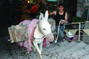 garbage donkey