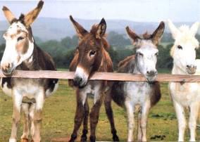 Adopt a Donkey - Donkey Sanctuary - Gifts