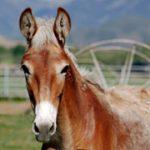 mule-foal_200