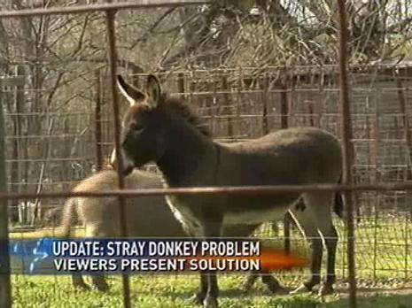 Donkey+show+mexico+pictures