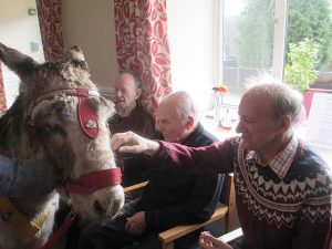 donkey in care home