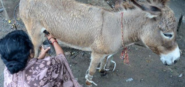 Of all milk, the donkey's is the costliest in the city