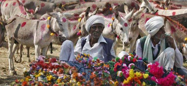 Donkey fair over, Vautha waits for its bridge
