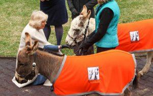 camilla-donkeys