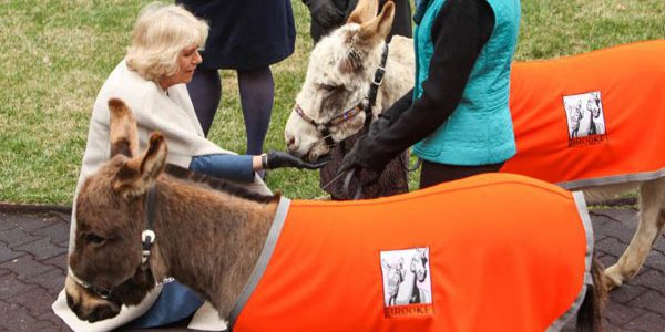 Camilla launches equine charity's USA branch