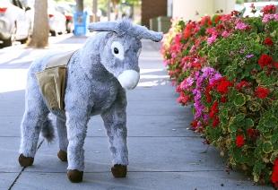 Donkey 'ambassador' to roam Palo Alto
