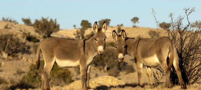 How Feral Donkeys Saved a Lost Hiker's Life in Death Valley