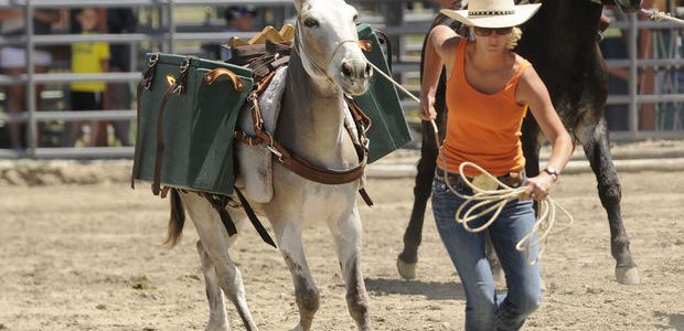 Racing, packing and driving on display at Montana Mule Days