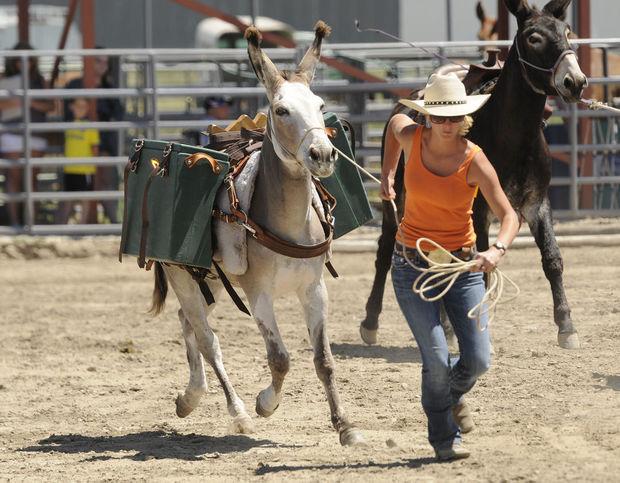 montana mule day